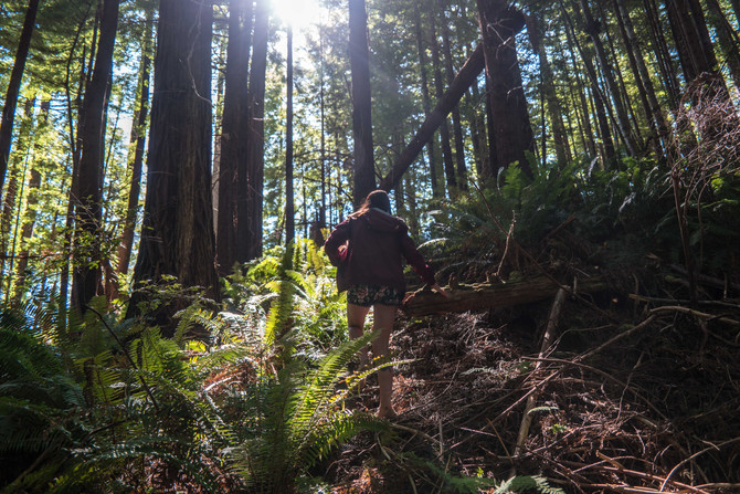 Searching for Old Growth Redwoods