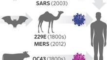 Informações e links úteis sobre o vírus SARS-CoV-2 e a doença COVID-19