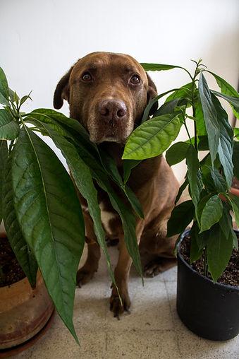 Portrait of a cute senior dog hiding in