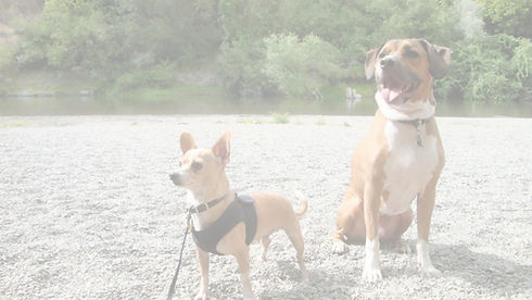 Photo of the Mighty Mutts logo dogs - hound and chihuahua - on a beach.