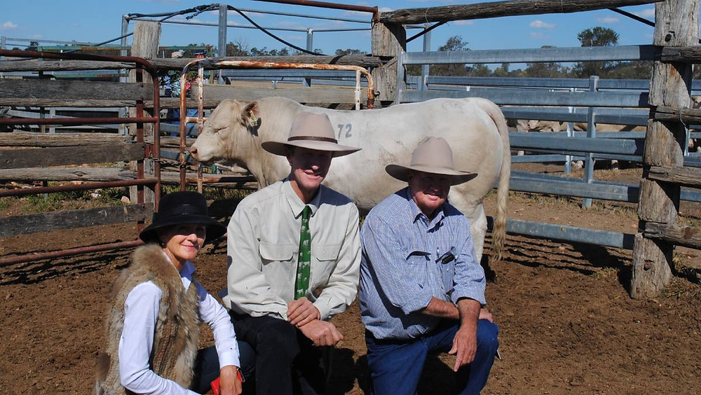 ANC Charolais' Norah and Andrew Cass with Chas Nobbs, Cordelia, Bauhinia and his $15,000 buy ANC Nitro.