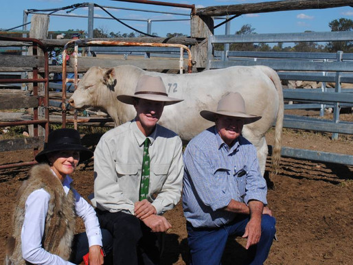ANC Charolais tops at $15,000 twice