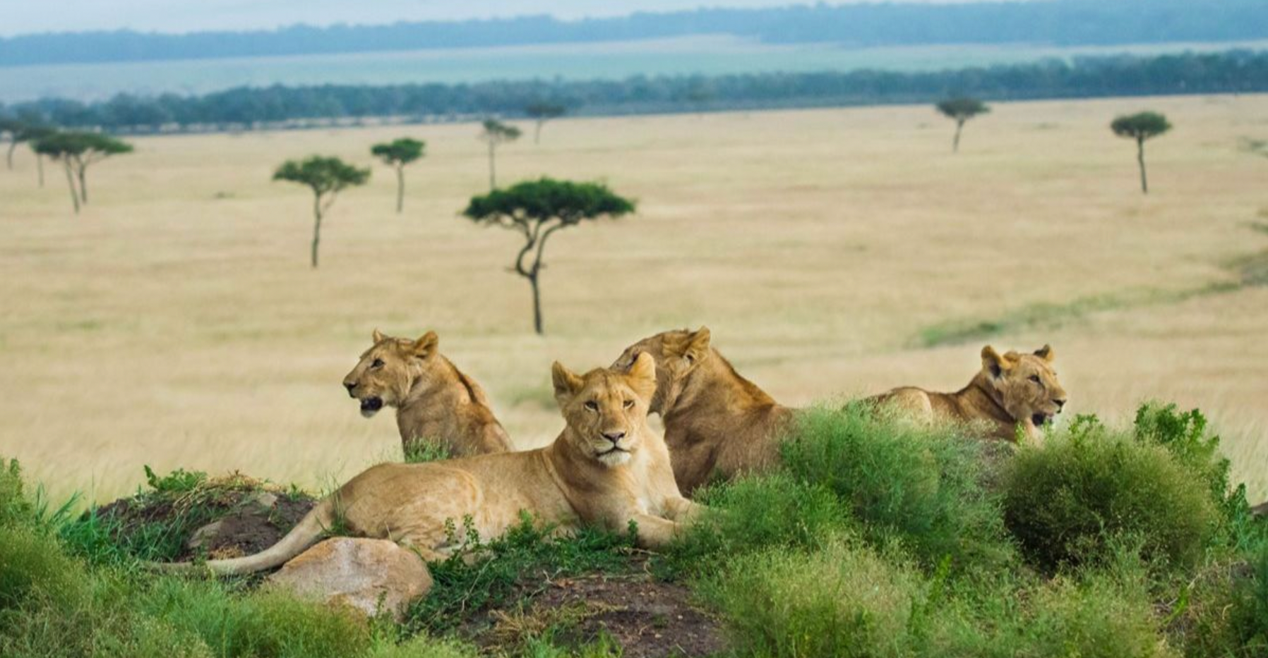What to Expect on Your First Safari