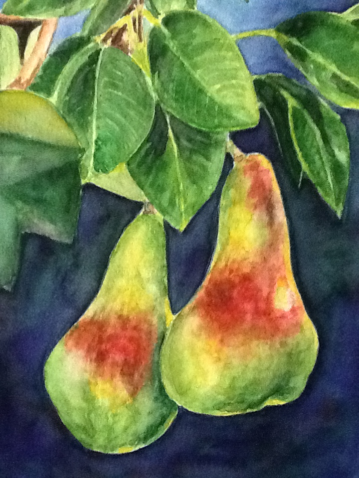 Hanging Pears