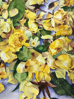 Corona Roses
