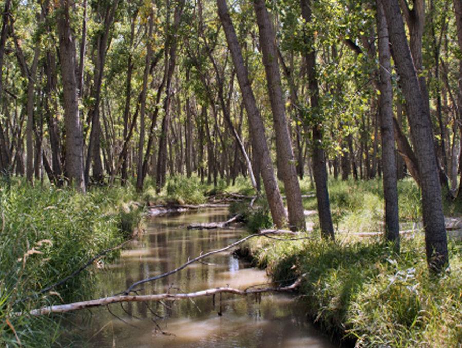 Cherry creek state park wetlands