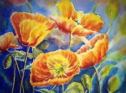 Poppy Crazy - Watercolor