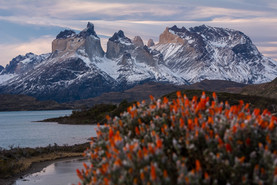 spring-blooming-photography-in-torre-del-paine-national-park