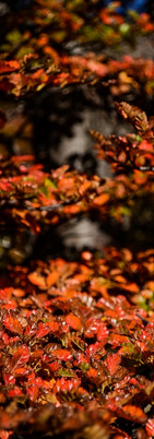 autumn-colours-decidous-forest-chilean-patagonia