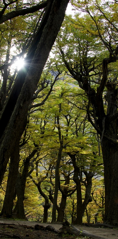 summer-magellanic-forest-torre-del-paine-national-park