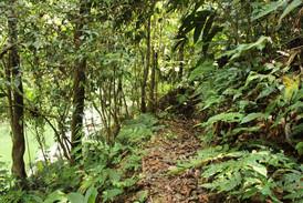 Senderos Reserva el Tigrillo Río Claro