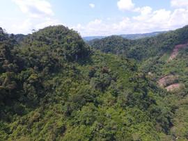 Reserva Rio Claro - El Tigrillo