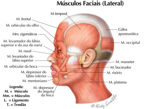 Músculos Faciais (Vista Lateral)