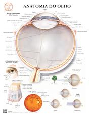 Anatomia do Olho