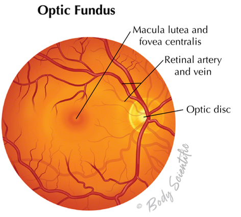 Optic Fundus