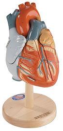 0140-00 HEART OF AMERICA.jpg