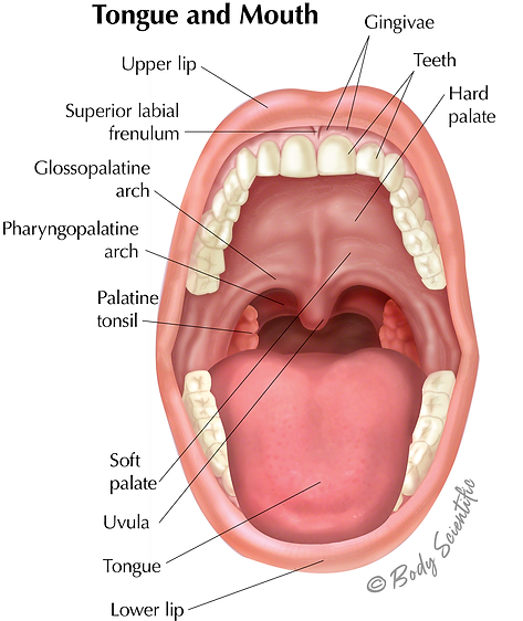 Tongue and Mouth