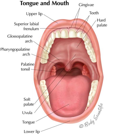 Tongue and Mouth