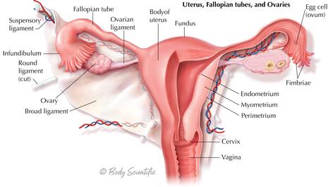 Uterus, Fallopian Tube and Ovaries