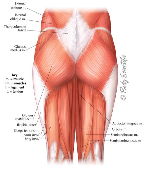Posterior Hip & Thigh