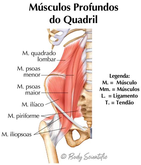 Músculos Profundos Do Quadril