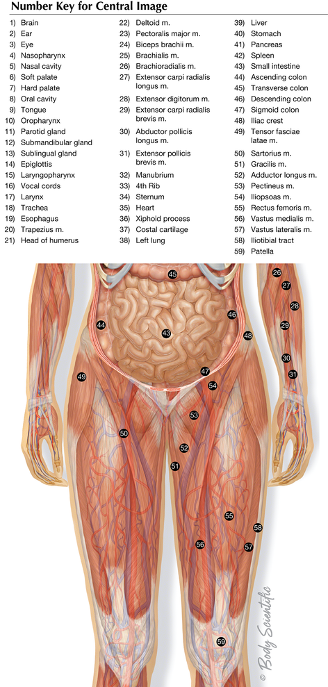 Lower Body System Overview