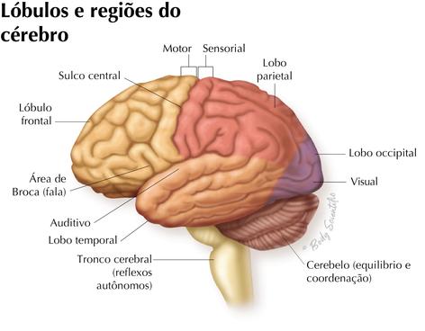 Lóbulos e Regiões do Cérebro
