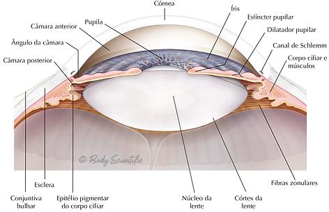 Córnea e Lente