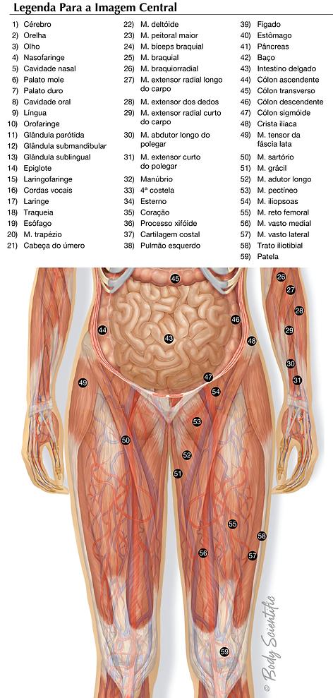 Visão Geral do Sistema da Parte Inferior do Corpo