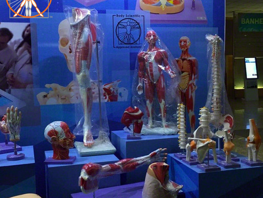 Civiam and BSI Anatomical Models - Brazil