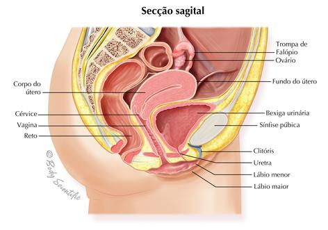 Secção Sagital