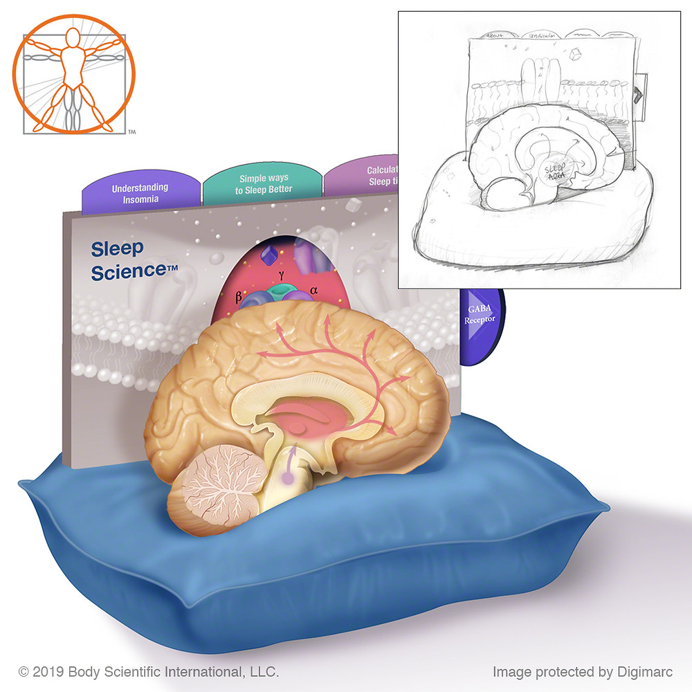 Sleeping brain on pillow for Science of Sleep model