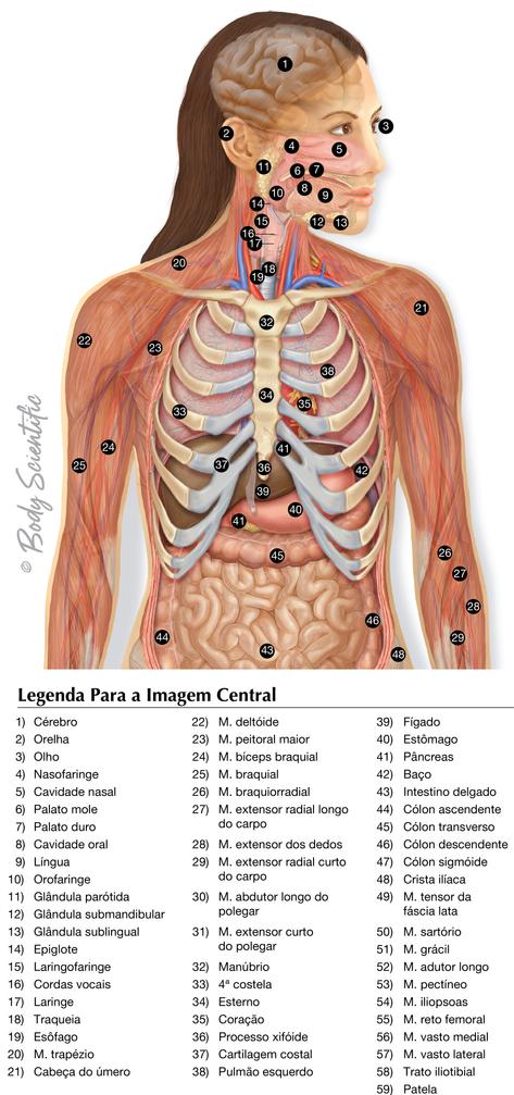 Visão Geral do Sistema da Parte Superior do Corpo