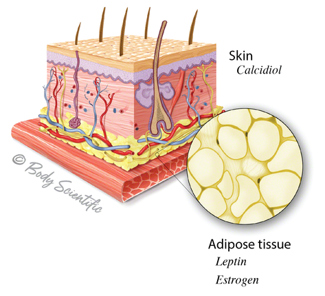 Skin and Adipose Tissue