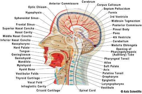 Sagittal View