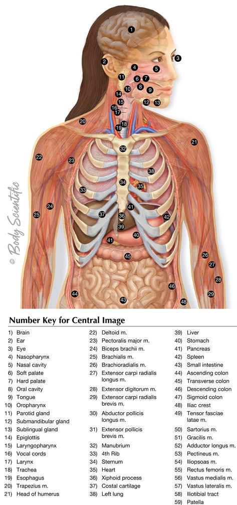 Upper Body System Overview