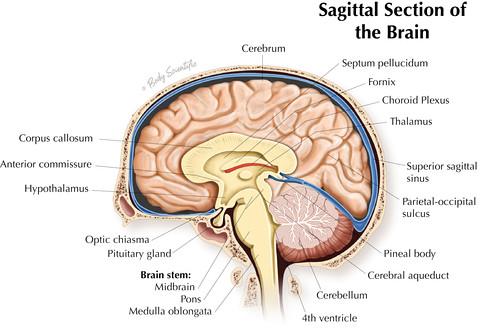 Sagittal Brain