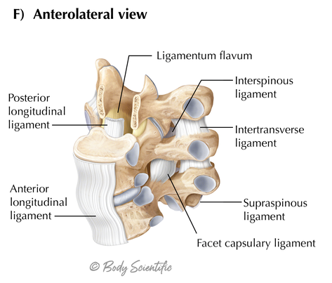 Thoracic Anterolateral View