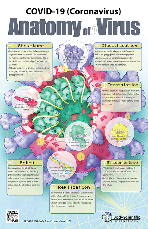 COVID-19 (Coronavirus) Anatomy of a Virus