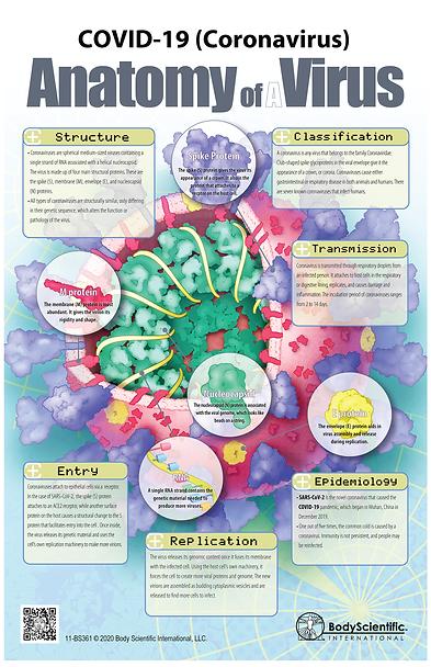 COVID-19 (Coronavirus) Anatomy of a Virus