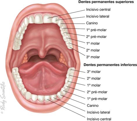 Cavidade Oral