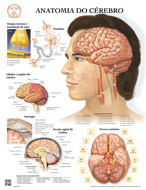 Anatomia do Cérebro