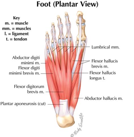 Foot Plantar View