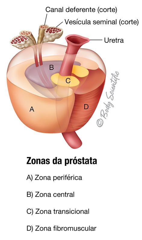Zonas da Próstata