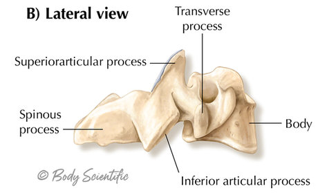Cervical Lateral View