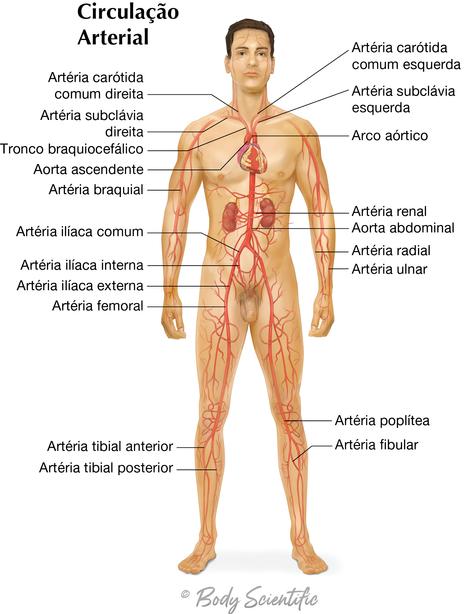 Circulação Arterial