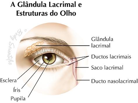 A Glândula Lacrimal e Estruturas do Olho