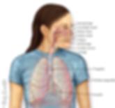 Visão Geral Respiratória