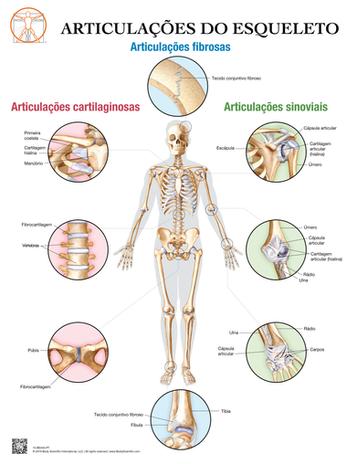 Articulações do Esqueleto