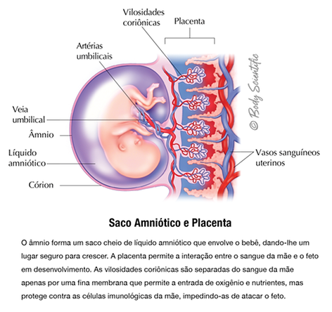 Saco Amniótico e Placenta